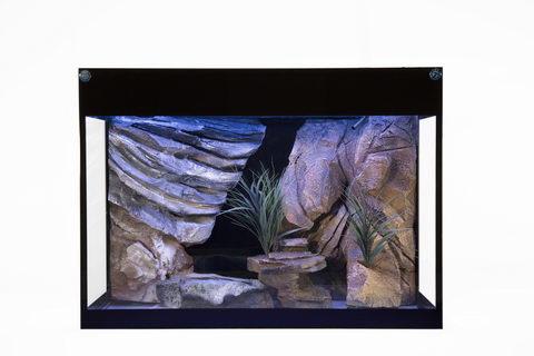 Klassisches Aquarium