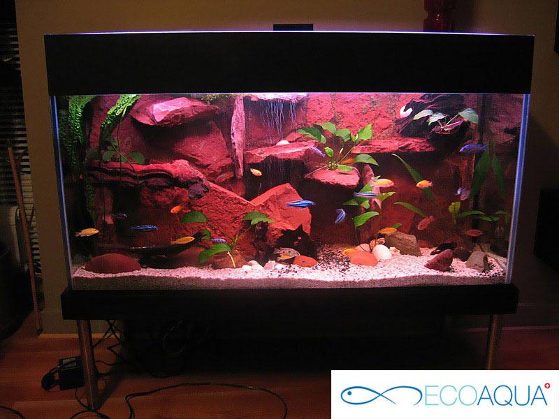 Aquarium at the moll