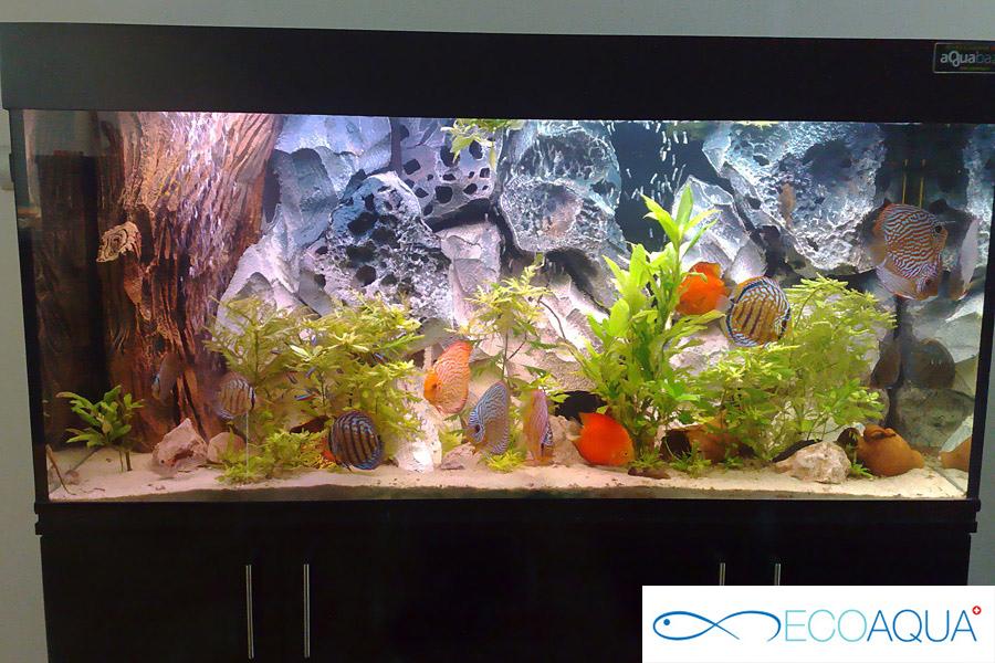 Aquarium in the apartment