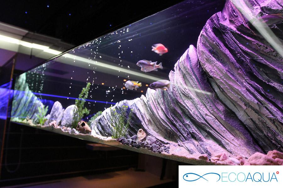 Aquarium in a private apartment - Belgrade