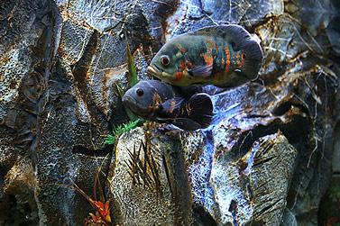 Alle 1-3 Monate - Aquarien Bedienungsanletung