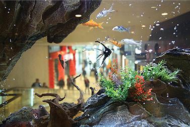 Alle 6-12 Monate - Aquarien Bedienungsanletung